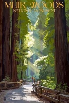 Muir Woods National Monument, California - Pathway - Lantern Press Poster