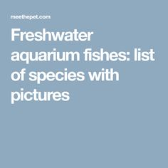 Freshwater aquarium fishes: list of species with pictures