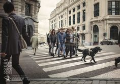 belgian-centre-for-guide-dogs-we-need-more-guide-dogs-print-377815-adeevee.jpg (2400×1697)