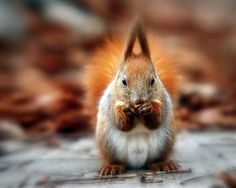 Nuts   Flickr - Photo Sharing!