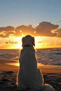 """Tudo que precisamos é de ... AMOR e ... de um cãozinho!  'Fé é assim, primeiro você coloca o pé, depois Deus coloca o chão""""..."""