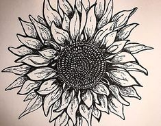 Daisy in Ink Watercolor Paper, Art Direction, Daisy, Behance, Paintings, Ink, Gallery, Drawings, Creative