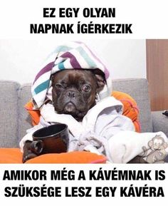 Ez egy húzós nap lesz! Kitartás mindenkinek! Vicces képek #humor #vicces #vicceskep #vicceskepek #humoros #vicc #humorosvideo #viccesoldal #poen #bikuci Funny Fails, Funny Jokes, Hilarious, Animal Memes, Funny Animals, Me Too Meme, Lyric Quotes, French Bulldog, Haha