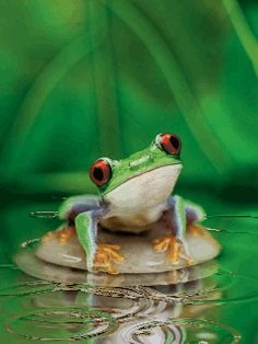 Hopping frogs, toads, tadpoles and amphibian gif animations