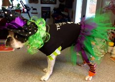 Boston Terrier Costume - Witch