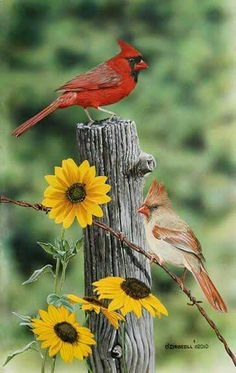 Cardinals and Sunflowers. What a beautiful picture.