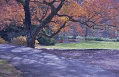Fall grace; Morris Arboretum; Philadelphia, Pennsylvania, USA.  November 2013.