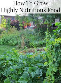 How to grow  highly nutritious vegetables and fruits in your garden