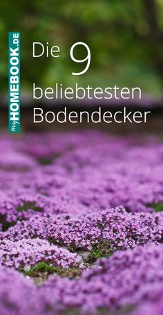 The 9 most popular groundcover- Die 9 beliebtesten Bodendecker If you plant ground cover, you can close gaps between shrubs and perennials in a sizable way. myHOMEBOOK tells you which nine plants are particularly popular. Balcony Plants, Balcony Garden, Amazing Gardens, Beautiful Gardens, Planting Shrubs, Strawberry Plants, Summer Plants, Ground Cover Plants, Garden Edging