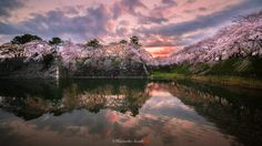 When sakura are blooming - The outer wall of Nagoya castle. This is a famous Japanese castle. Nagoya this morning. It is a morning glow before it rains. Sakura and a castle are beautiful. Please introduce to all of you. :)  Thank you.