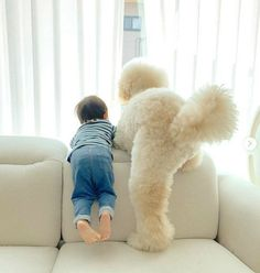 Giant Poodle, Baby Dogs, Doggies, French Poodles, Fluffy Dogs, Best Friends Forever, Goldendoodle, Cute Baby Animals, Japanese Girl