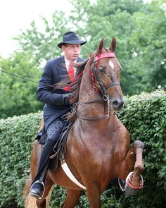 RWCC I'm Lookin' For You...American Saddlebred