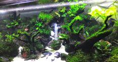 Apakah anda pernah lihat Aquarium yang didalamnya ada air terjun? Mungkin anda akan sangat heran, Kog Bisa ada air terjun didalam air...