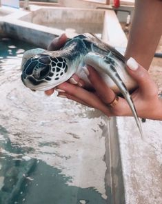 You bought the turtle so you can have more fun with family members and friends. Baby Animals Super Cute, Cute Little Animals, Cute Funny Animals, Cute Dogs, Baby Animals Pictures, Cute Animal Pictures, Animals And Pets, Wild Animals, Funny Baby Photography