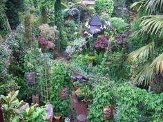 The Garden - The Magic Garden