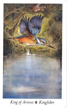 Kingfisher (King of Arrows) - Wildwood Tarot