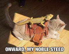 Reptile humour | follow @sophieeleana