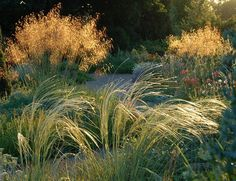 The Beth Chatto Gardens - Gravel Garden/ golden oat grass nxt to flowering plants top patio wall