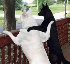 Best Friends - Funny Dog Pictures