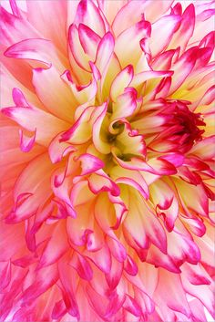I would love this...Pink edged petals