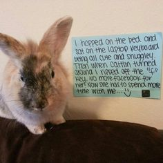First There Was Dog Shaming, Then Cat Shaming, Now Bunny Shaming? Funny Bunnies, Baby Bunnies, Cute Bunny, Bunny Bunny, Animals And Pets, Baby Animals, Funny Animals, Cute Animals, Animals Beautiful