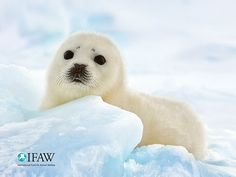 Make IFAW your computer/mobile device wallpaper: | IFAW - International Fund for Animal Welfare