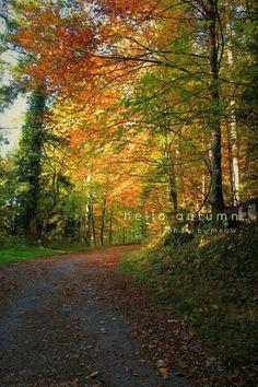 Fall in October