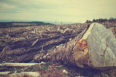 CRIME AMBIENTAL NO LITORAL SUL. CONDENADOS TERÃO QUE RECUPERAR A ÁREA belaitanhaem.blogspot.com É tanta a repercussão do desmatamento da Amazônia que parece até que os crimes ambientais de desmatamento ilegal... É tanta a repercussão do...