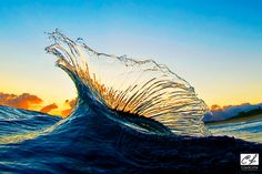 Marlin shaped wave, North Shore, Oahu, Hawaii. Clark Little Photography.