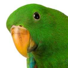 Looks like my baby. Male Eclectus. He is such a brat too.