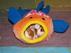 A ferret toy, good for guinea pigs.