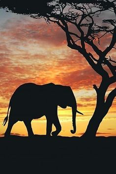 Elephant and tree silhouette with sunset African Elephant, African Animals, African Art, Elephant Silhouette, Animal Silhouette, Elephant Wallpaper, African Sunset, Silhouette Painting, Elephant Love