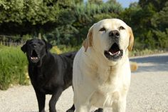 While problem barking can be an annoying behaviour, it is relatively simple to stop with a few simple tools without resorting to barking collars.