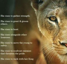 Love this picture that Lisa Bevere shared this morning! I still need to read Lioness Arising!