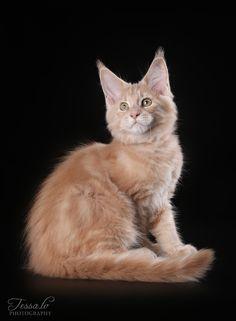 Сегодня у нас славные котятки - маленькие рыси :) Только посмотрите…: tessochka