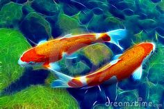 Yin Yang Koi Or Carp Fish In Pond - Download From Over 50 Million High Quality Stock Photos, Images, Vectors. Sign up for FREE today. Image: 10700747