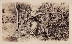 Old Antique Vintage Photograph Young Blonde Boy Shooting Rifle Into Bushes