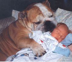 Our Boston would cuddle with Liam like this if we'd let her! She loves that baby!