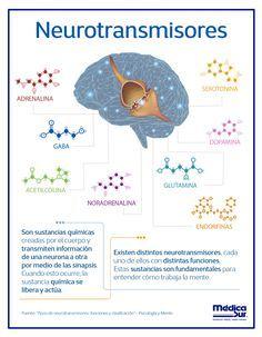 # infomedicalur # neurology - Another! Brain Anatomy, Medical Anatomy, Anatomy And Physiology, Brain Science, Science Biology, Medical Science, Medicine Notes, Medicine Student, Neurone