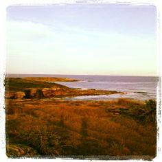 Afternoon at Botany Bay National park