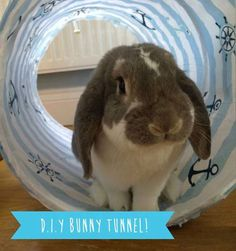 """8.) Make a pop-up laundry basket <a href=""""http://newbunnydiaries.tumblr.com/post/89185110676/diy-rabbit-toys-the-bunny-tunnel"""" target=""""_blank"""">bunny tunnel</a>."""