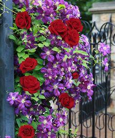 23 best bagatelle rose garden paris images paths formal gardens rh pinterest com