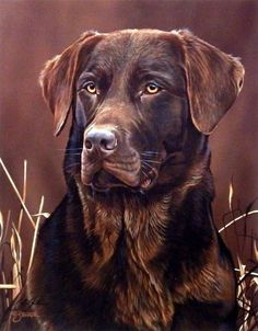 Black Labrador Scot Storm Loyal Companion- Chocolate Lab (Chocolate Lab Water) - This print is signed and is available unframed in an image size of Labrador Retrievers, Golden Retriever, Retriever Puppies, Rottweiler Puppies, Lab Puppies, Most Popular Dog Breeds, Black Labrador, Golden Labrador, Labrador Dogs