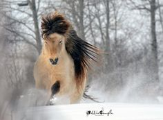 Pretty pony playing in the snow.