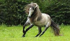 Dapple gray horse | dapple grey | Tumblr
