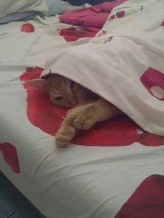 My Mel Gibson sleeping :)