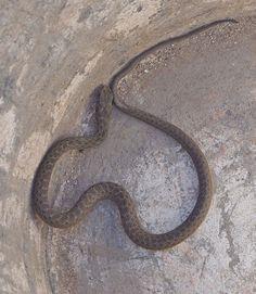 Welke slang ?