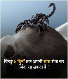 Amazing Science Facts In Hindi . Amazing Facts In Hindi Amazing Funny Facts, Amazing Science Facts, Interesting Facts About World, Unbelievable Facts, General Knowledge Book, Gernal Knowledge, Knowledge Quotes, Wow Facts, Real Facts