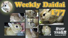 Weekly Daidai 177