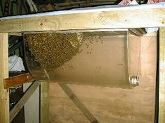 Wow!  A top bar observation hive.